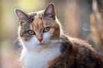 Обои Трехцветная кошка на размытом фоне, фотограф Martin Schаfer