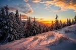Обои Зимний лес на закате