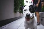 Обои Собака с открытым ртом, by Pexels