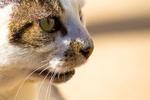 Обои Мордочка кота на светлом фоне, by Lisandro Trarbach
