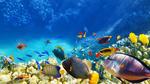 Обои Разные рыбки под водой