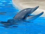 Обои Морда дельфина выглядывает из воды, by Hans Braxmeier