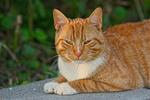 Обои Рыжая кошка лежит на бетонной поверхности на размытом фоне, by Mabel Amber