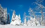 Обои Заснеженные деревья на фоне неба, by Ilona