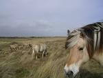 Обои Лошадь в профиль на фоне пасущихся на лугу лошадей, by JDavid Mark