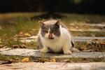 Обои Кошка с высунутым языком сидит на дорожке