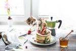 Обои Полосатый котенок, лежа на подоконнике, пытается дотянуться до клубники на столе, на котором стоит тарелка с блинами и фруктами