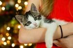 Обои Девушка держит на руках котенка, by Jeffrey Buchbinder