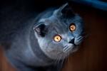 Обои Кошка с янтарными глазами