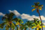 Обои Пальмы на фоне неба, by Valentin Valkov