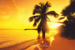 Обои Пальмы на тропическом острове, пляж на восходе солнца, by Valentin Valkov