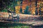 Обои Скамейка на земле с опавшими листьями на размытом фоне осенних деревьев, by Albrecht Fietz