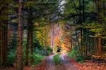 Обои Лесная дорога на фоне осенних деревьев, by Albrecht Fietz