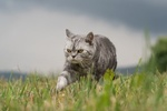 Обои Серый кот в траве, by Nadja Auer