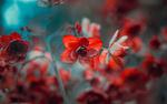 Обои Красные цветочки на размытом фоне