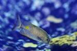 Обои Рыбка на размытом фоне by Karsten Paulick