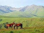 Обои Лошади у подножия гор, фотограф Наталья Коллегова