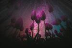 Обои Сиреневые тюльпаны на фоне млечного пути в ночном звездном небе