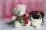 Обои Плюшевый мишка с тюльпанами и трехцветная кошечка (С 8 Марта)
