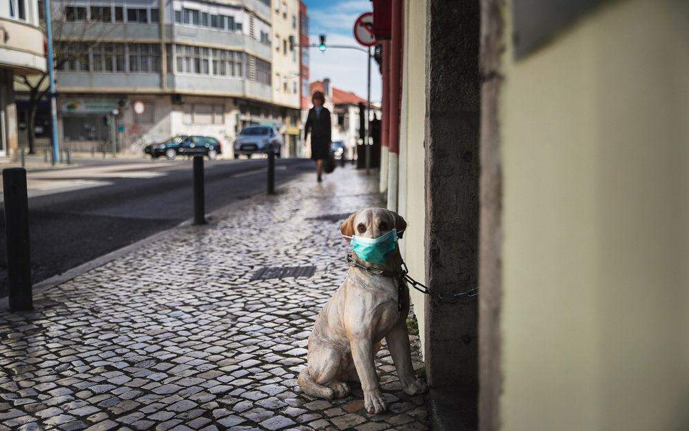 Обои для рабочего стола Собака на цепи в маске сидит на тротуаре