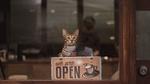 Обои Полосатая кошка сидит в окне рядом с табличкой (we are OPEN / мы открылись), фотограф Jefferson Vinluan