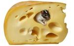 Обои Мышонок сидит в дырочке в головке сыра