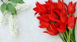 Обои Красные тюльпаны и ветка цветущей черемухи