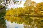 Обои Осенние деревья на берегу у водоема