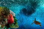 Обои Черепаха и рыбки под водой, by Seaman Shanghai