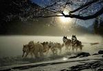 Обои Сибирские хаски бегут по снегу в упряжке на фоне поднимающегося солнца, by cocoparisienne