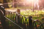 Обои Белка на заборе, фотограф Крис Франк