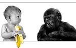 Обои Ребенок с бананом и маленькая горилла с вопрошающим взором