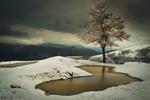 Обои Дерево у замерзшей речушки, by Qane Sh. esmaili