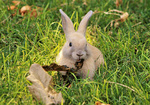 Обои Кролик в траве, by Renee Grayson
