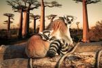 Обои Лемуры сидят на бревнах на фоне деревьев, by Fabio Grandis
