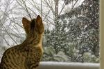 Обои Серая кошка на фоне окна, в которое видно деревья и падающий снег, by Gundula Vogel