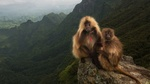 Обои Две обезьяны сидят на камне в горах