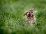 Обои Крольчонок в траве