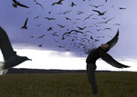 Обои Парень в образе ворона, фотограф Geoffrey Devautour