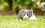 Обои Котенок лежит в траве
