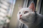 Обои Белая кошка у окна