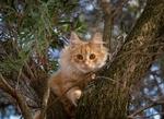Обои Рыжий котенок на дереве