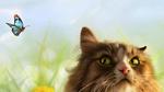 Обои Зеленоглазый кот смотрит на бабочку