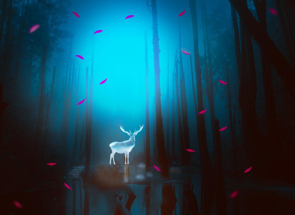 Обои для рабочего стола Призрачный олень в утреннем лесу, окутанным туманом