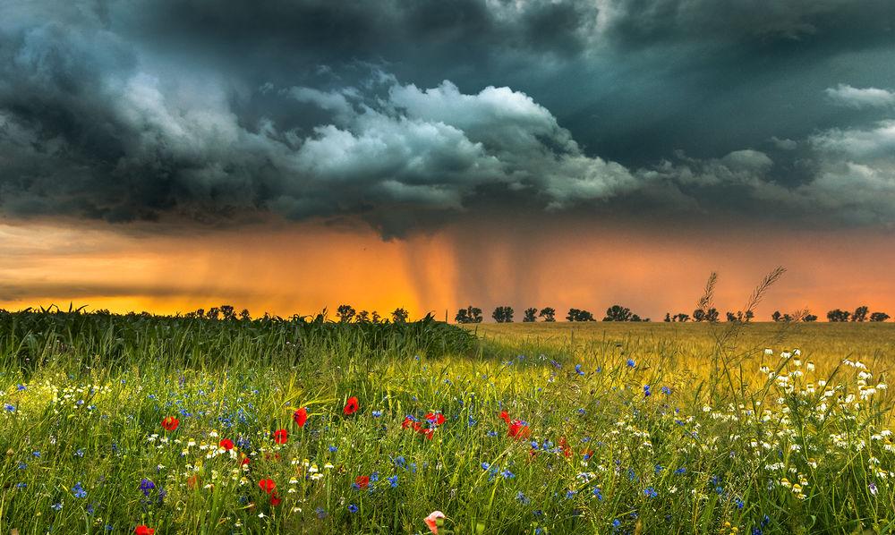 Обои для рабочего стола Грозовое небо над полем с маками, ромашками и васильками. Фотограф Robert Kropacz