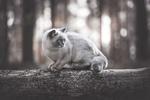 Обои Кошка на бревне, фотограф Natalie Grobe