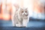 Обои Кошка на дороге, фотограф Natalie Grobe