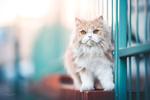 Обои Кошка стоит у ограды, фотограф Natalie Grobe