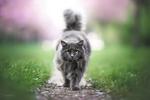 Обои Черная кошка идет по дорожке, фотограф Natalie Grobe