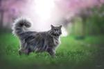 Обои Черная кошка стоит на зеленой траве, фотограф Natalie Grobe